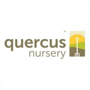 Quercus Website Design